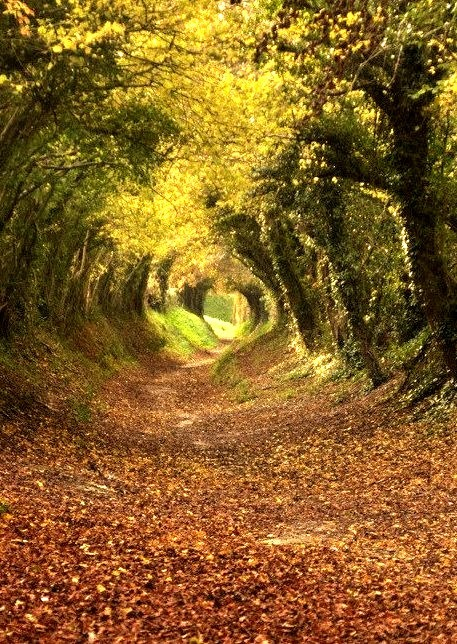 Tree Tunnel Path to Halnaker Mill, West Sussex. England