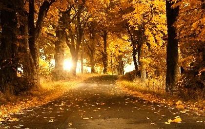Autumn Road, Sweden