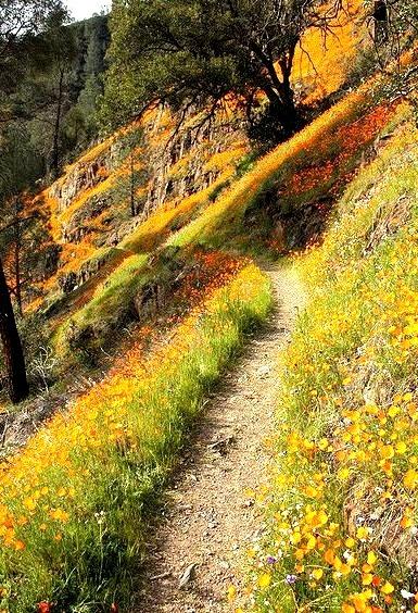 Wildflowers along Hite Cove Trail in Yosemite, California, USA