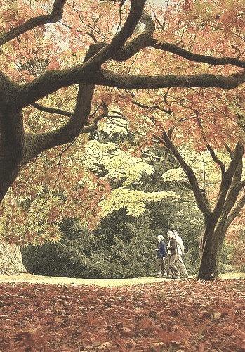 Autumn colours at Westonbirt Arboretum in Gloucestershire, England